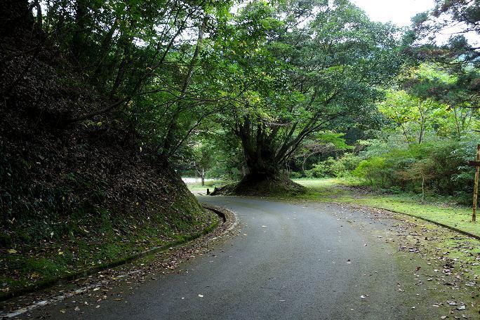 旧道の様子.JPG