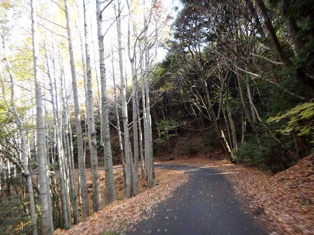 12 すてきな林道.JPG