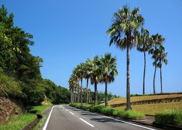 41 宮崎らしい道路.JPG
