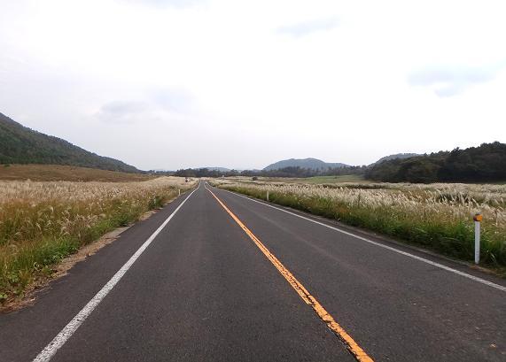 6 ススキの道.JPG