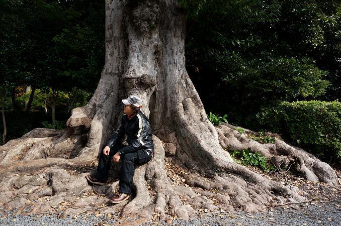 8 でっかい樫の木.JPG