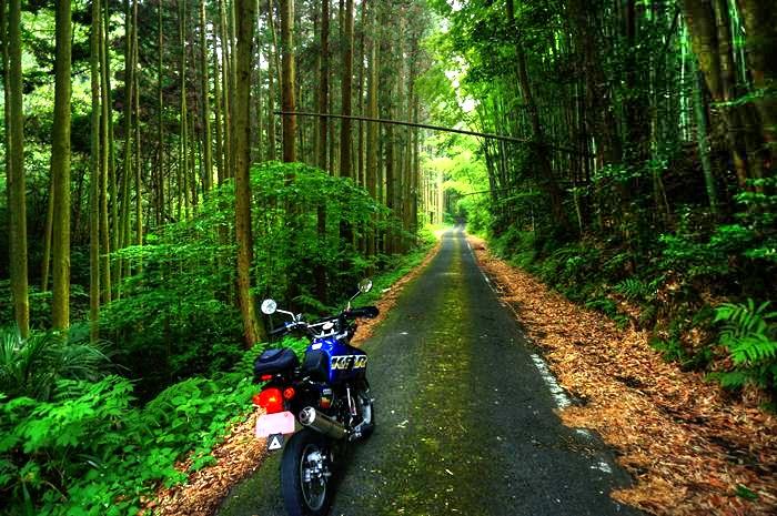 でっかいバイクじゃあまり通りたくない道です_ - コピー_tonemapped.jpg
